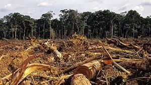 Fonte da imagem: http://www.fapeam.am.gov.br/